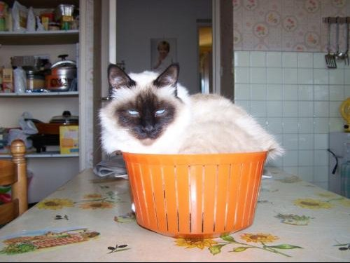 ponette dans le panier a salade 001