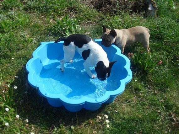 Leur piscine