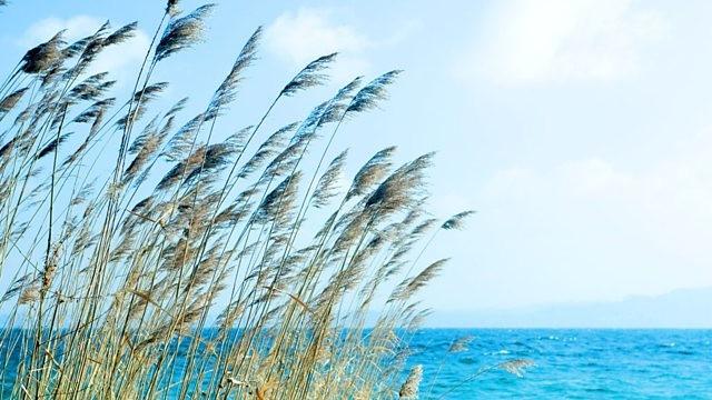 Au bord de la mer..