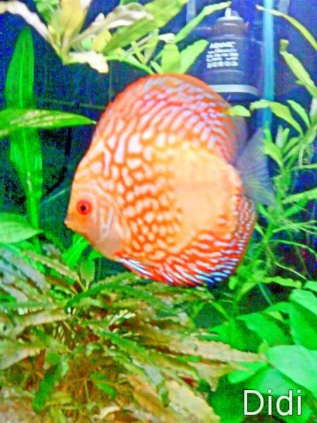 Donner une photo de votre poisson aquariums et vivariums for Donner poisson