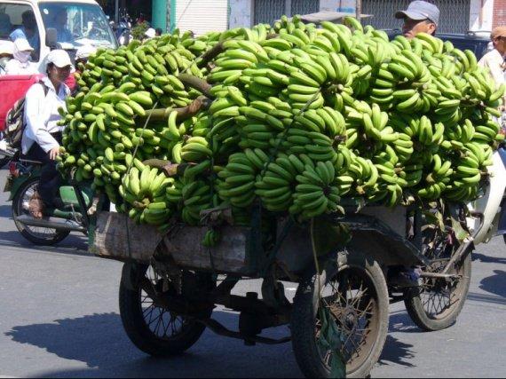 FRUITS Bananes