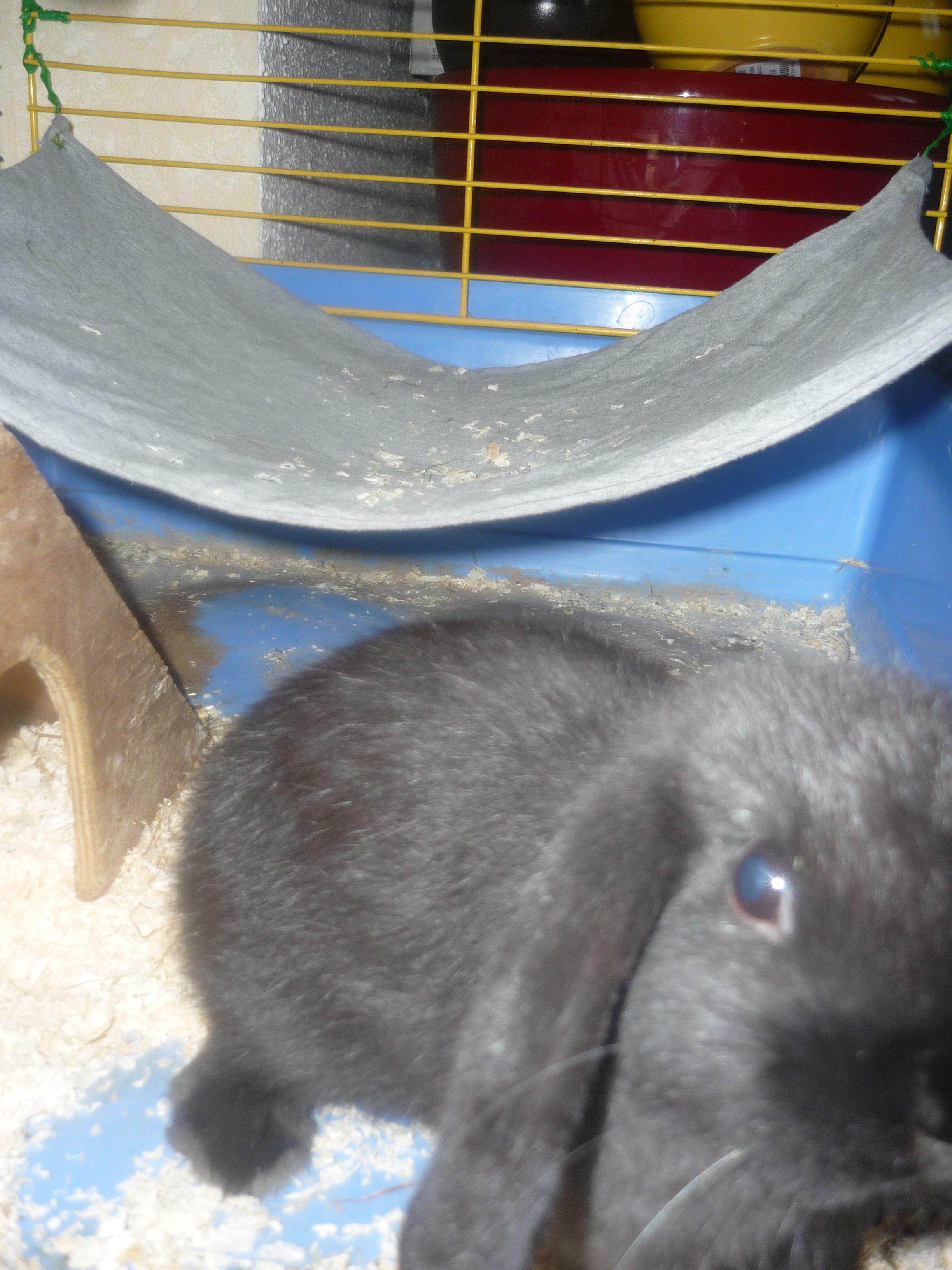 Faire Un Hamac Pour Lapin Rats Hamsters Cochons D Inde