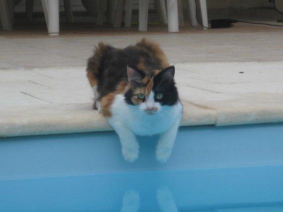 Déliss piscine (2009)