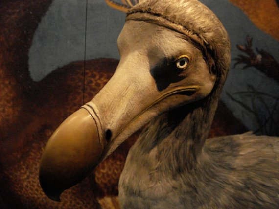 divers-dodo-img