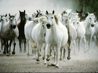 wildhorses