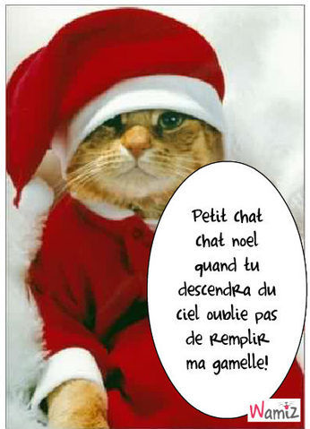 Chat no l divers nanie la vie photos club doctissimo - Image de chat de noel ...
