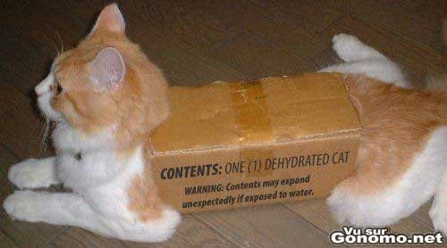 un-chat-dans-un-carton