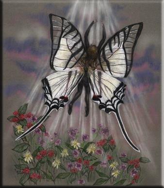petits-gifs-papillons-2-img