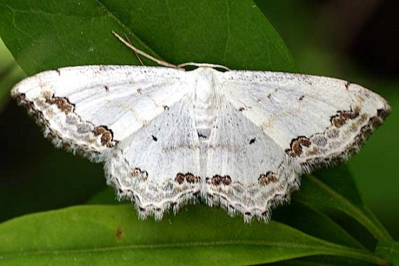 petits-gifs-papillons-3-img