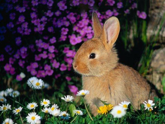 petits-gifs-lapins-16-img