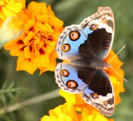 petits-gifs-papillons-59-img