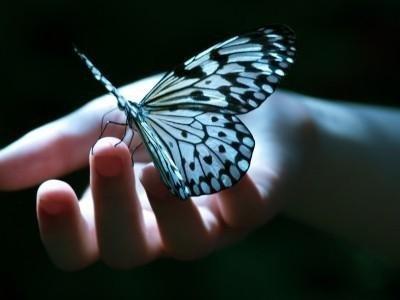 petits-gifs-papillons-61-img