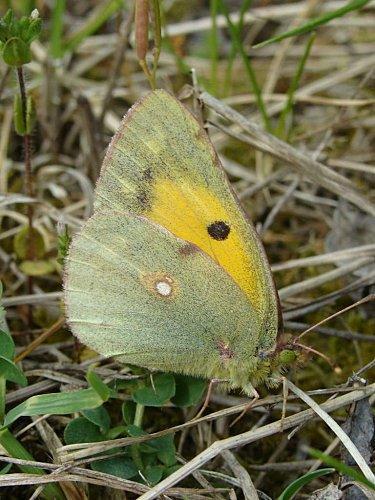 petits-gifs-papillons-62-img
