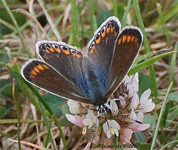 petits-gifs-papillons-64-img
