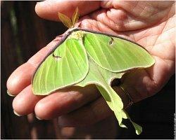 petits-gifs-papillons-65-img