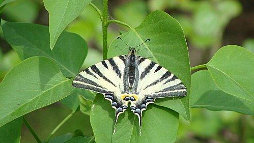 petits-gifs-papillons-66-img