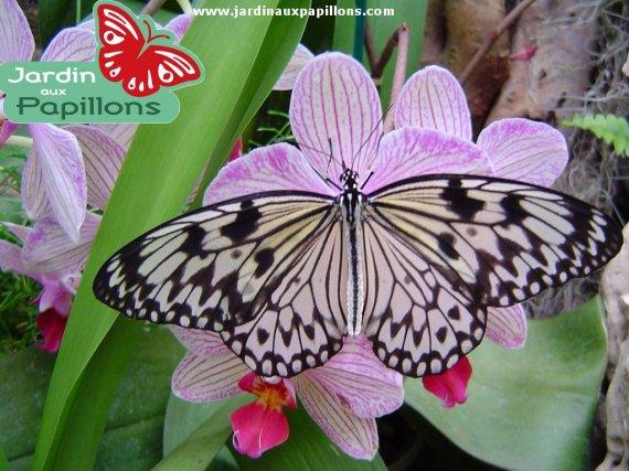 petits-gifs-papillons-68-img