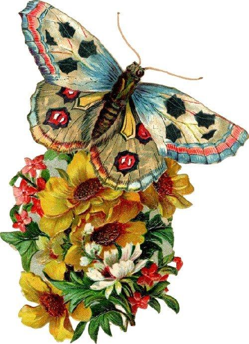 petits-gifs-papillons-0000-img