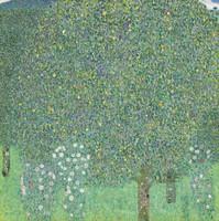Rosiers sous les arbres, Klimt