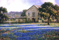 Mark Haworth, Field of flowers