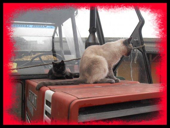 En tracteur!!!
