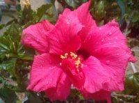 A chaque jour sa fleur !