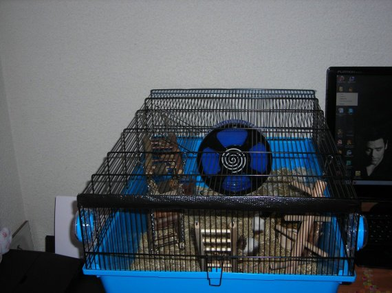 Cage kios des souris