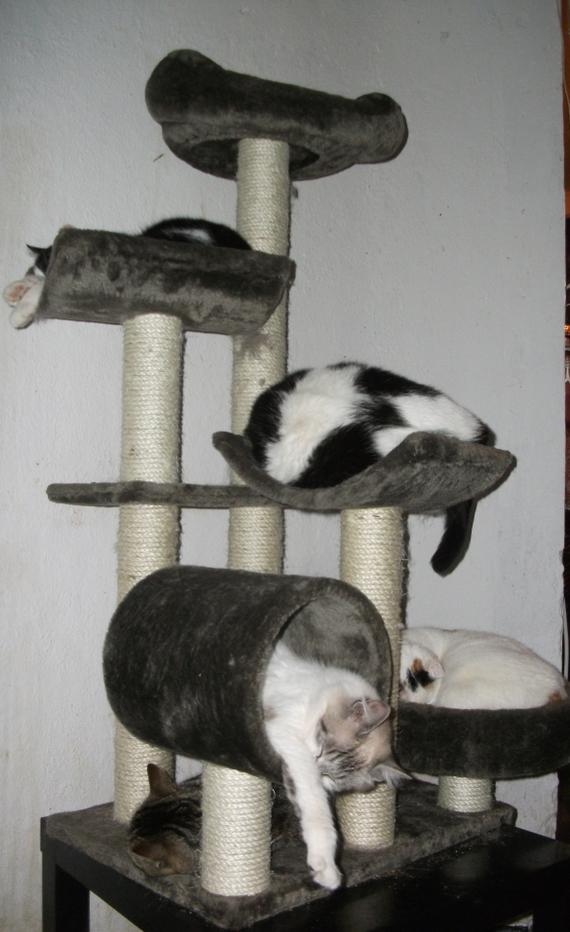 chats-arbre-img