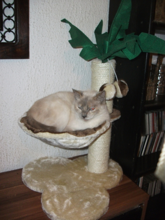 chats-lucie-img