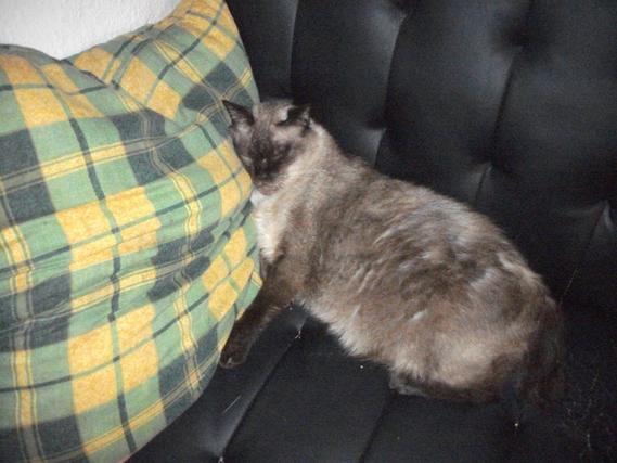 chats-pouffi-img