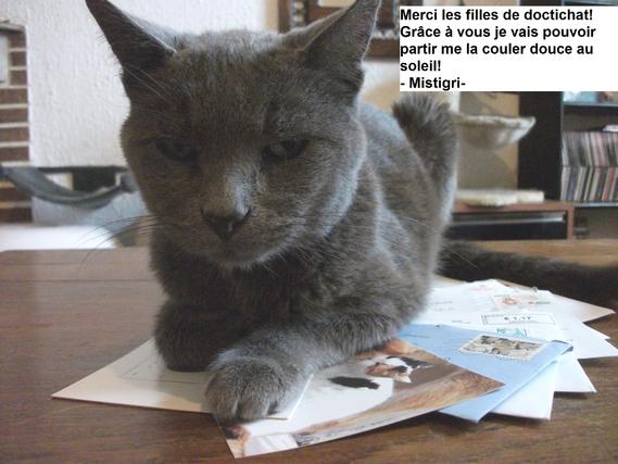 chats-mist-img
