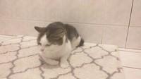 En mode couché sur tapis de salle de bains :)