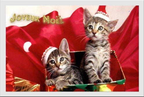 joyeux noel chat