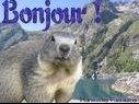 marmotte bonjour