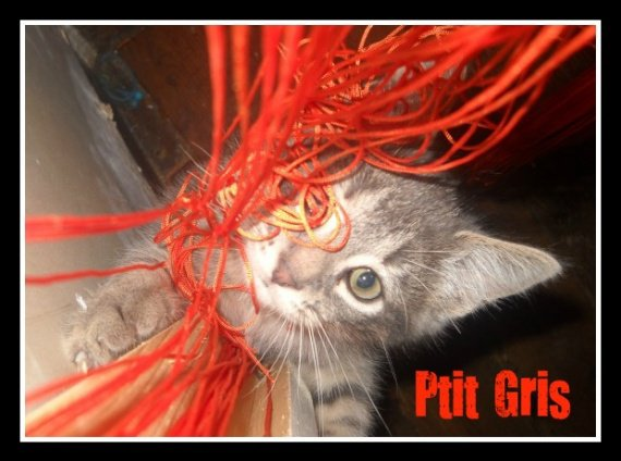 Ptit Gris