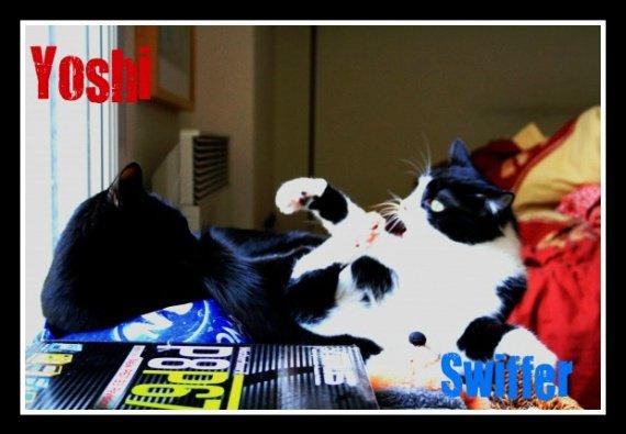 Swiffer et Yoshi