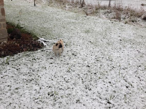 lylou neige