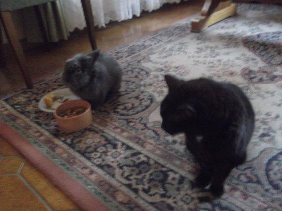Lapinou & Minou