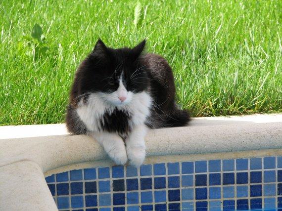 TIMO piscine
