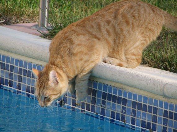 kimi piscine