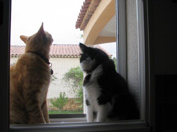 KIMI & TIMO