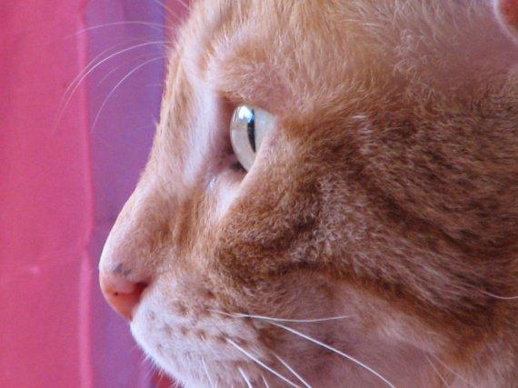 profil KIMI
