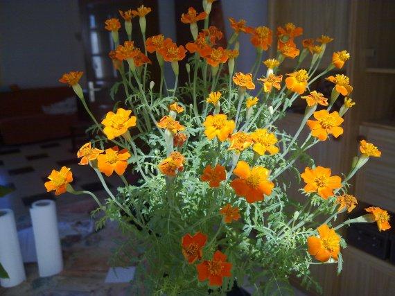 le nom d 39 une petite fleur orange jardinage forum vie pratique. Black Bedroom Furniture Sets. Home Design Ideas