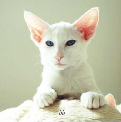 Lili-(4)