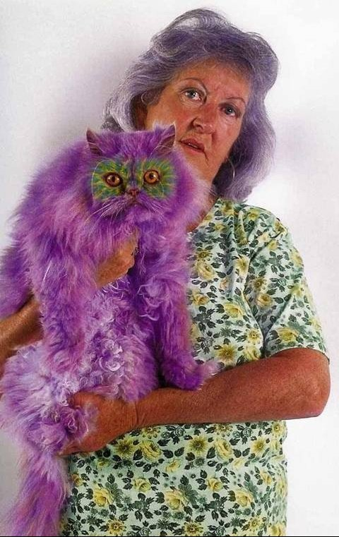 painted-cats-purple-cat