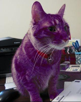 Purple Cat 2