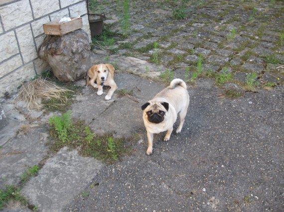 Cloé et Paco