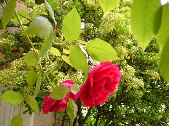 Jardin les Roses photo de zabh 08