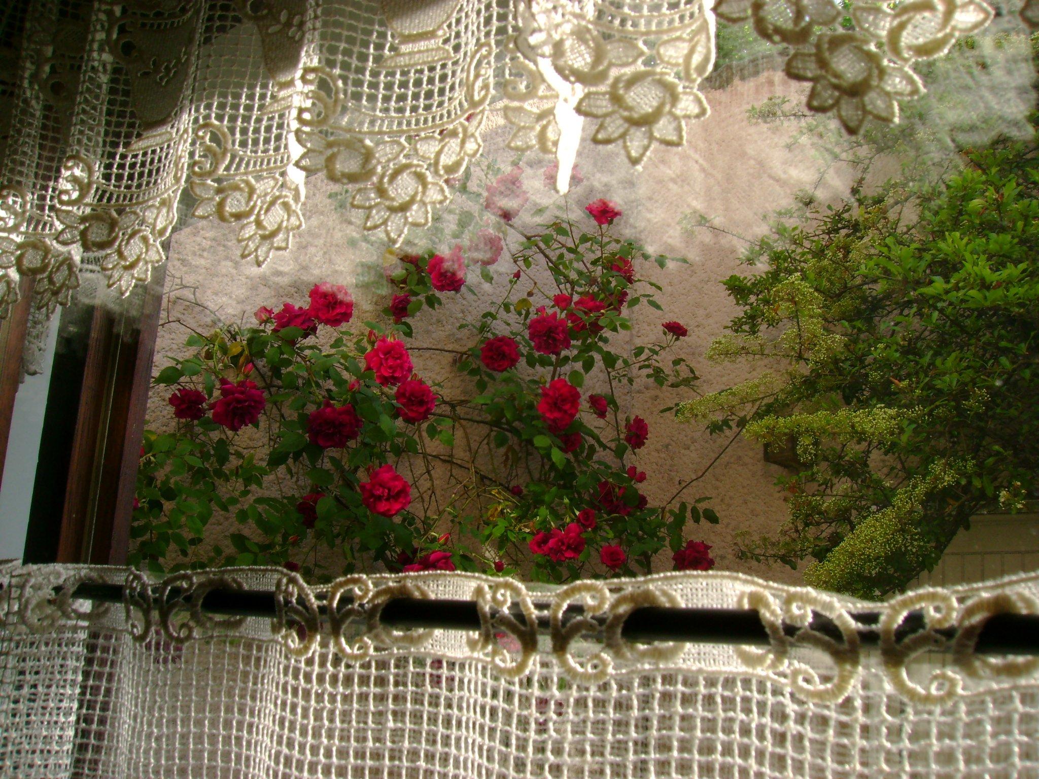 Des fenêtres d'hier et d'aujourd'hui. - Page 6 Grenier-copyright-bezabh-roses-fenetre-jardin-big