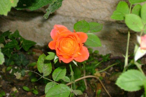 La petite Fleur du Chemin...